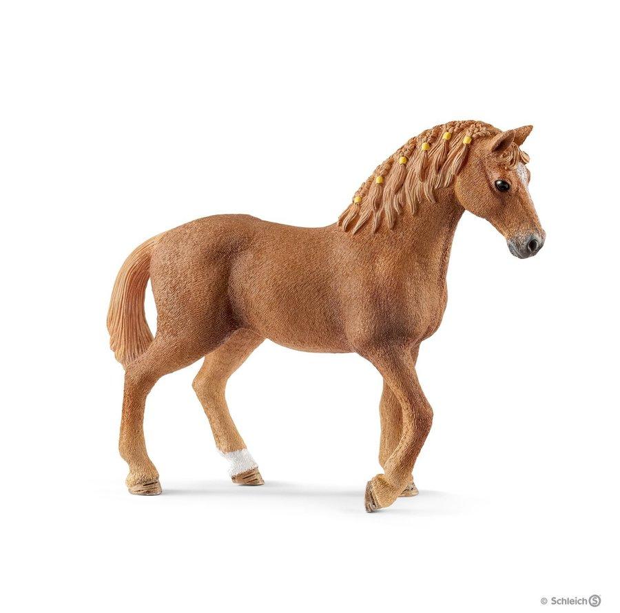 GIUMENTA QUARTER HORSE foto 2